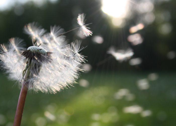 Medidas para evitar los brotes alérgicos y la astenia primaveral en los mayores
